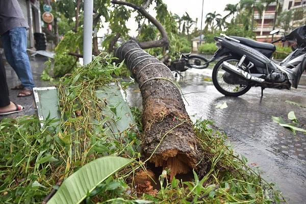 Do ảnh hưởng của bão số 5, nhiều cây xanh tại Thừa Thiên - Huế bị gãy đổ