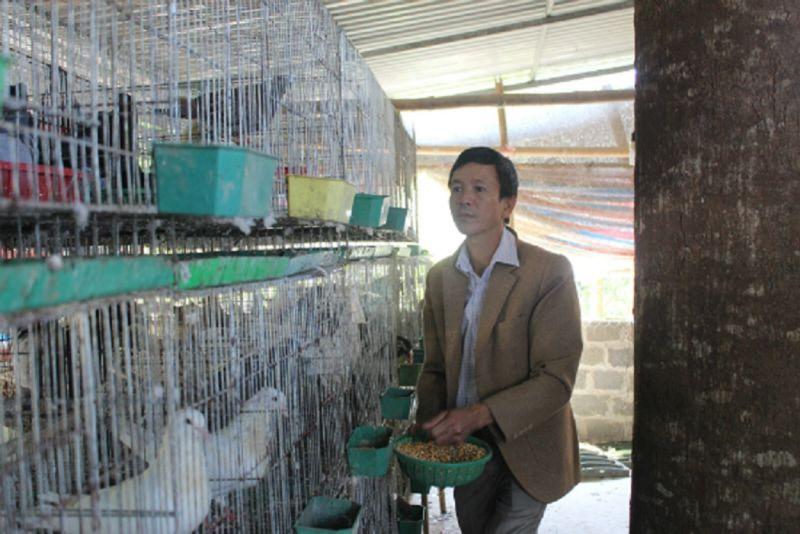 Dự án nuôi chim bồ câu mở ra hướng đi mới cho người chăn nuôi