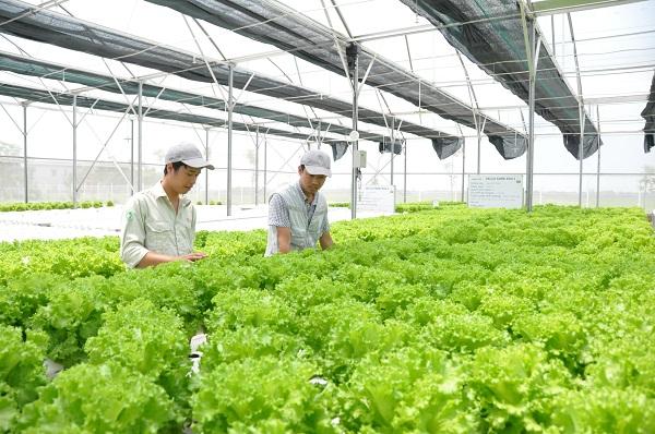 Hà Nội: Ban hành kế hoạch phát triển nông nghiệp, nông thôn năm 2021 (Ảnh minh họa)
