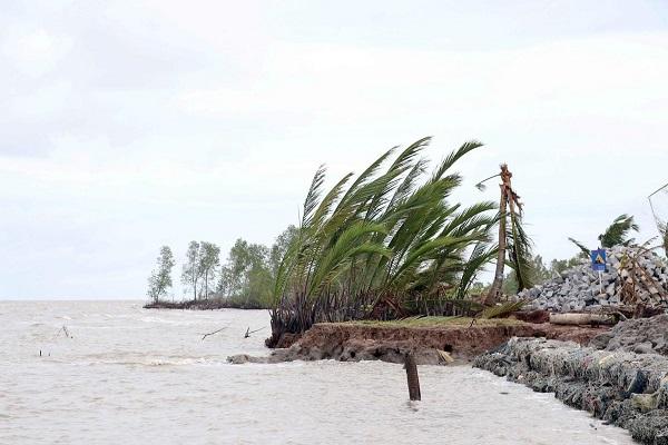 Cà Mau xuất hiện 4 đoạn sạt lở bờ biển nghiêm trọng
