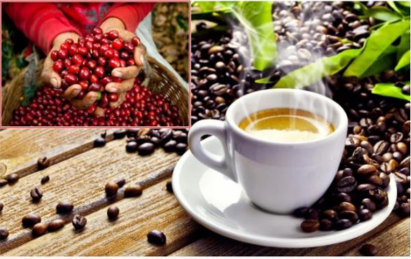 Giá tiêu, cà phê tăng mạnh