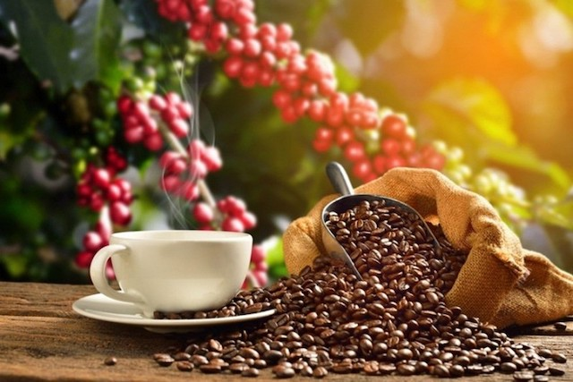 Giá cà phê hôm nay 26/9: Giá cà phê Tây Nguyên tăng thêm 100 - 200 đồng/kg