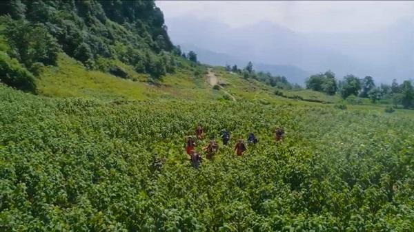 Khu vực nguồn nguyên liệu sâm Fansipan  của Công ty TNHH Long Hải