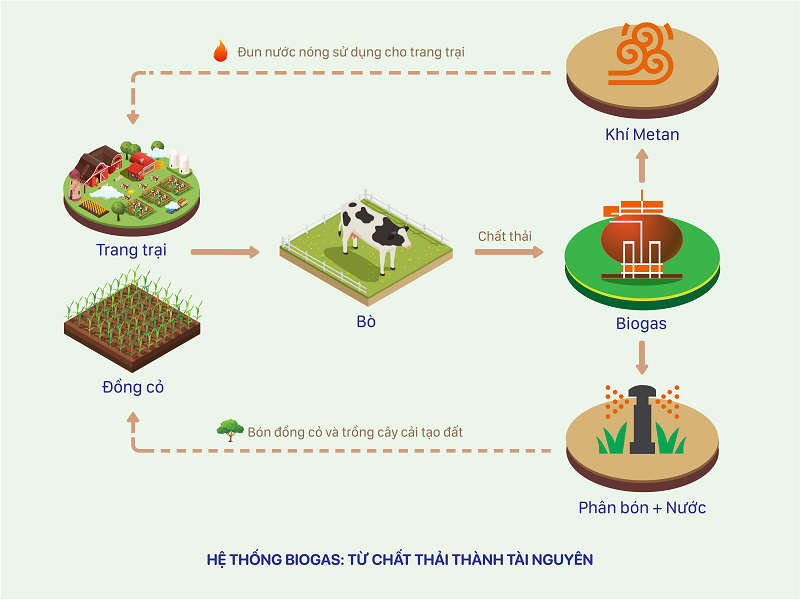Sơ đồ về hệ thống Biogas tại các trang trại bò sữa Vinamilk, giúp biến chất thải thành tài nguyên
