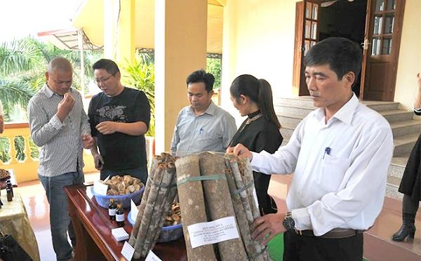 Sản phẩm Quế Văn Yên được giới thiệu đến các doanh nghiệp ngoài tỉnh.