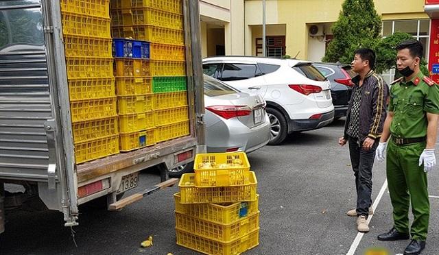 Lạng Sơn: Phát hiện gần 1 vạn con vịt giống nhập lậu