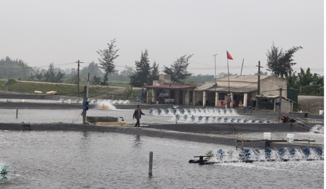 Trong 9 tháng năm 2020, khai thác và nuôi trồng thủy sản tại Thanh Hóa đạt 145.000 tấn
