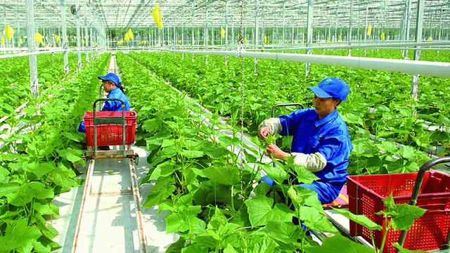 Thanh Hoá: Phát triển các sản phẩm nông nghiệp chủ lực tỉnh giai đoạn 2021 - 2025, định hướng đến năm 2030