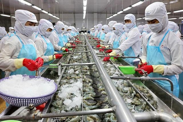 Xuất khẩu tôm của Việt Nam có nhiều cơ hội trong bối cảnh khó khăn chung của xuất khẩu thủy sản.