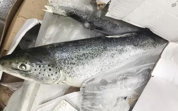 Cá hồi nguyên con có xuất xứ từ nước ngoài đã quá hạn sử dụng nhiều tháng.