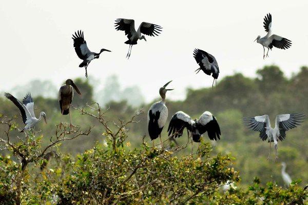 Nhiều loài chim quý hiếm nằm trong sách đỏ tại Khu Du lịch Sinh thái Gáo Giồng