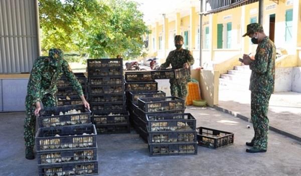 Quảng Ninh: Bắt giữ gần 11.000 con gà giống nhập lậu