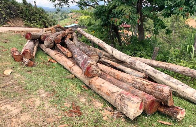 Một vụ khai thác gỗ trước đó tại xã Măng Cành, huyện Kon Plông, Kon Tum.