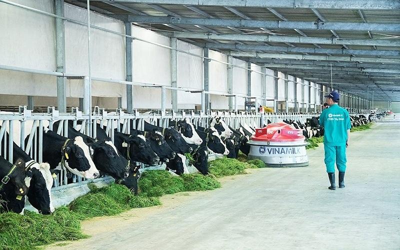 Hiện đang sở hữu 13 trang trại trong và ngoài nước theo chuẩn quốc tế, Vinamilk hiện đang là nơi đào tạo và làm việc của nhiều chuyên gia trong ngành chăn nuôi bò sữa