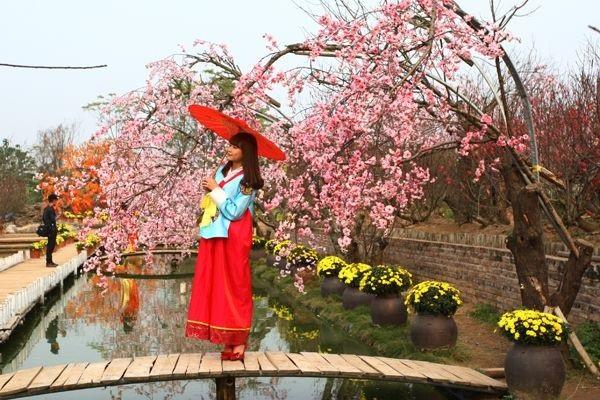 Làng nghề truyền thống hoa đào Nhật Tân được hỗ trợ phát triển xây dựng thương hiệu