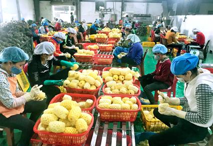 Tìm giải pháp gỡ khó cho nông sản xuất khẩu vào thị trường Trung Quốc