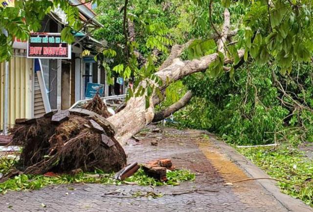 Nhiều cây lớn bị bật gốc