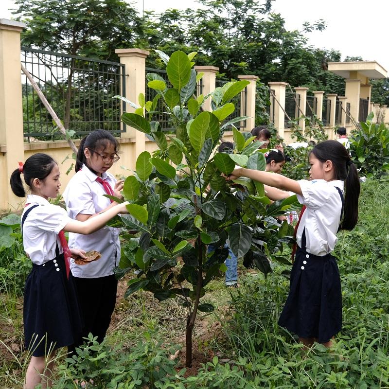 Trồng cây không chỉ để bảo vệ môi trường sống của chúng ta ngày hôm nay mà còn nhằm gìn giữ cho thế hệ tương lai