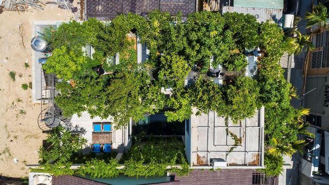 Công trình nhà ở phủ đầy màu xanh