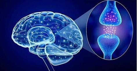 Serotonin là một chất dẫn truyền thần kinh quan trọng