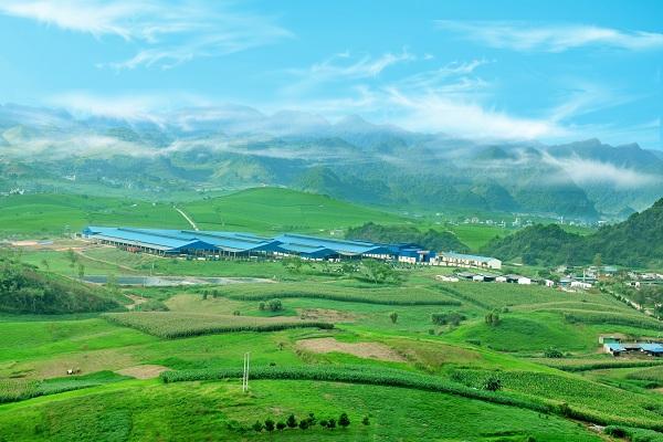 Cao nguyên Mộc Châu sẽ được đầu tư để trở thành thủ phủ bò sữa của Việt Nam.