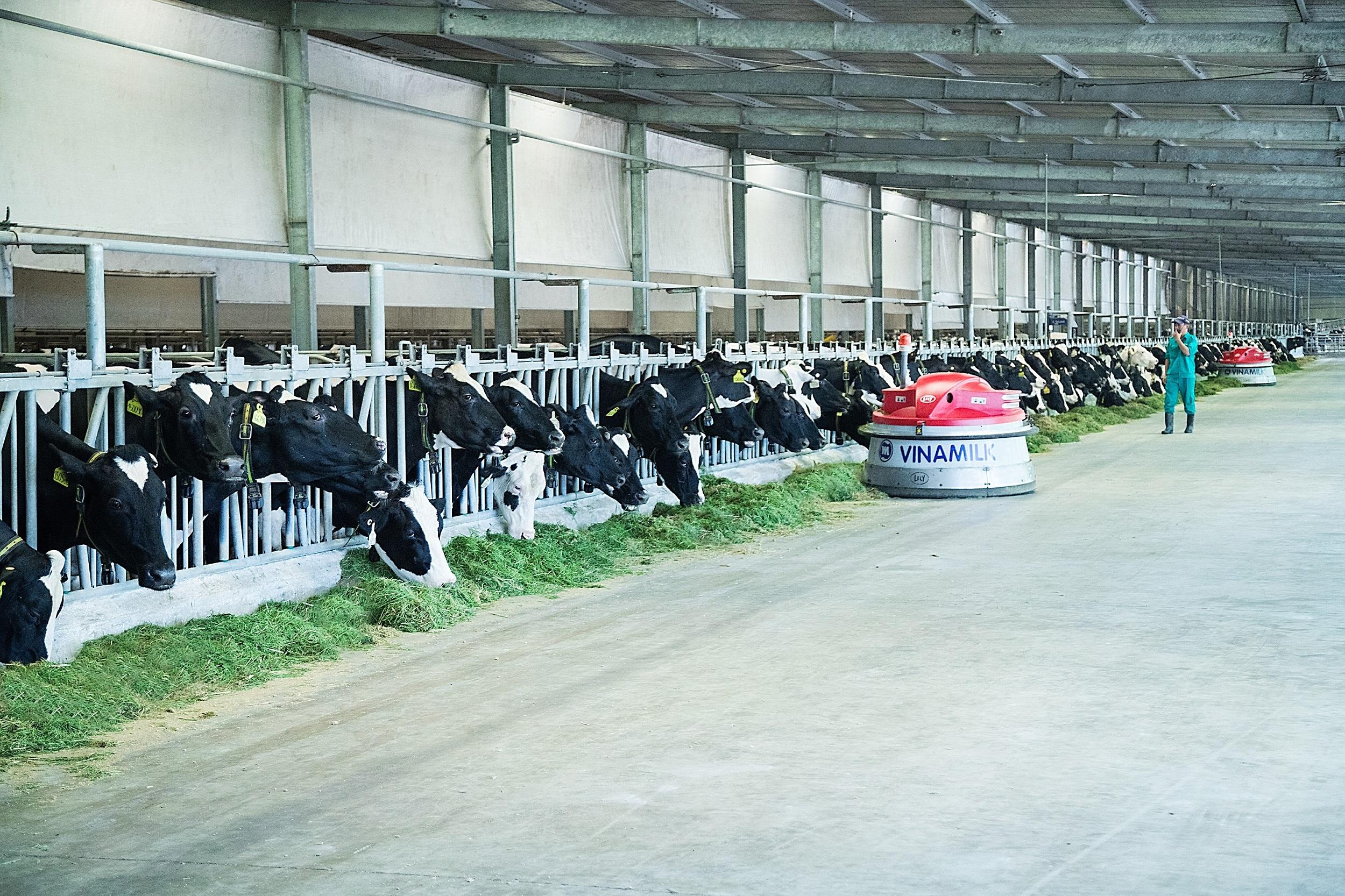 Resort bò sữa của Vinamilk tại Tây Ninh vừa được khánh thành trong năm 2019.