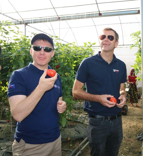 Trải nghiệm tại vườn cà chua