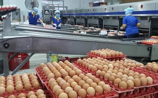 Số lượng hạn ngạch thuế quan nhập khẩu trứng gia cầm là 60.819 tá