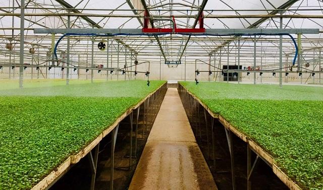 VinEco Tam Đảo ứng dụng công nghệ cao vào sản xuất, hướng đến xuất khẩu nông sản sạch