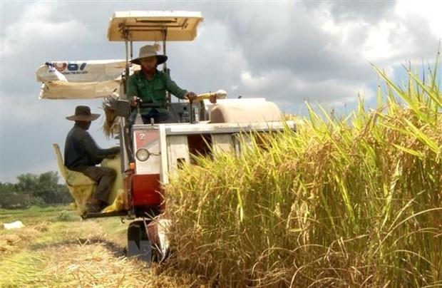 Giá lúa gạo hôm nay ngày 11/1: Giá lúa gạo duy trì ở mức cao