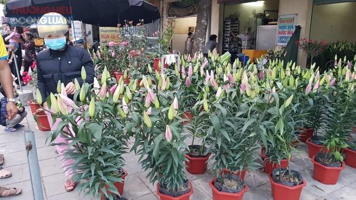 …Cho đến hoa Lan, hoa Ly đều vắng khách mua hàng