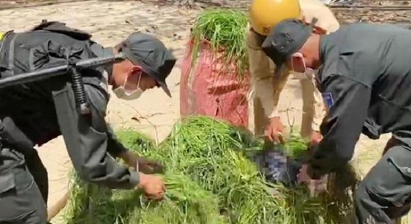thuốc lá ngoại nhập lậu ngụy trang trong gánh cỏ
