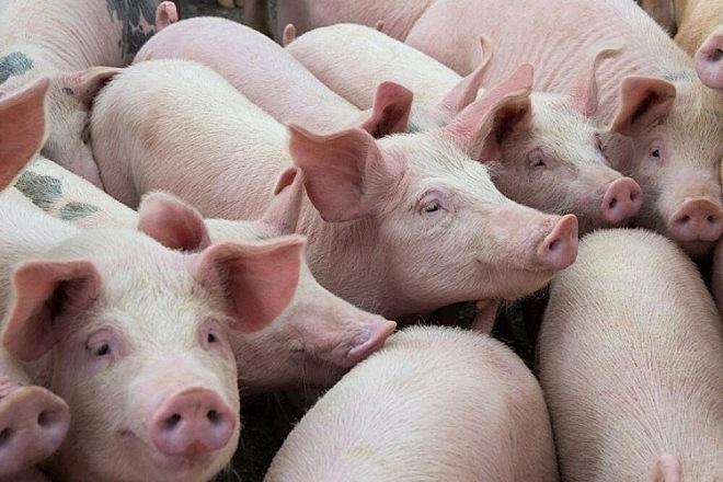 Giá lợn hơi ngày 23/2 vẫn giữ ở mức tương đối ổn định