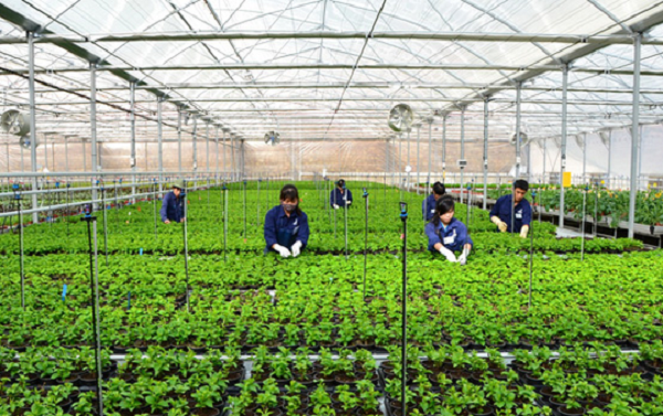 Hàn Quốc tiếp tục cho phép lao động hết hạn hợp đồng được chuyển sang làm lao động thời vụ tạm thời