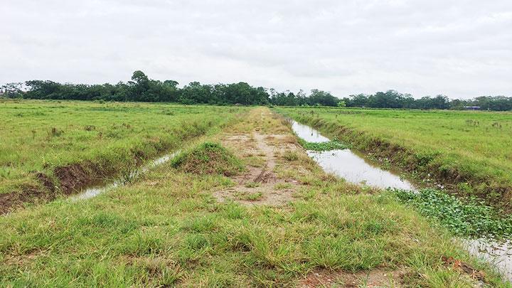 Gần một năm nay, tại xã Phú Xuân, huyện Bình Xuyên, tỉnh Vĩnh Phúc, hàng trăm mẫu ruộng của người nông dân bị bỏ hoang, gây tổn thất hàng nghìn tấn lúa.