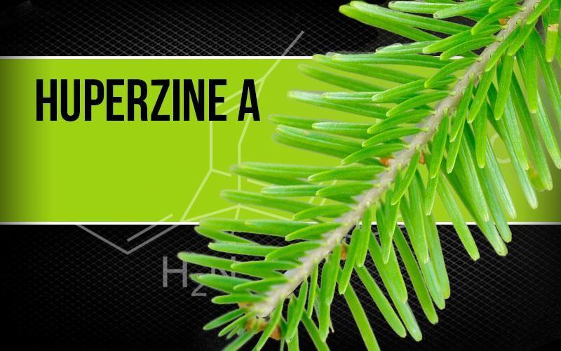 Thạch tùng răng chứa huperzine A. trong Kinh Vương Não Bộ giúp tăng cường dẫn truyền thần kinh, bảo vệ tế bào não