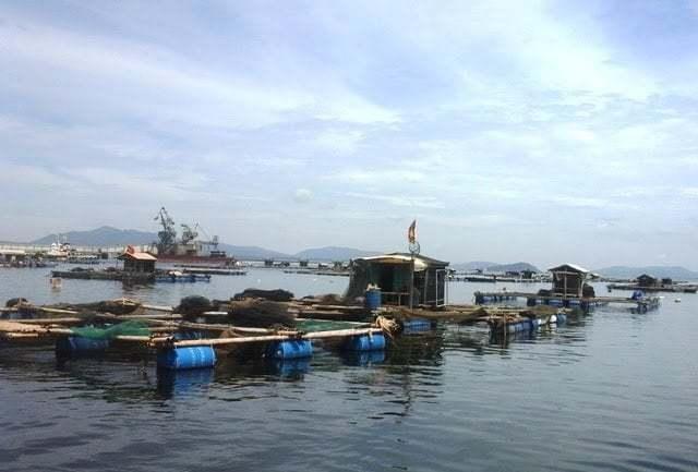Khu vực nuôi cá bè lồng tại xã Nghi Sơn (TX Nghi Sơn, Thanh Hóa).