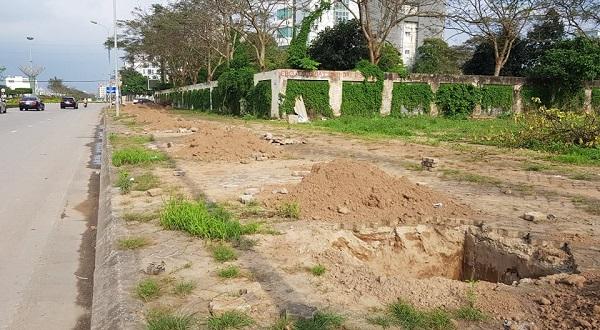 Dọc tuyến đường Trường Chinh các đơn vị đã cho chuyển cây cũ trồng được nhiều năm đi nơi khác