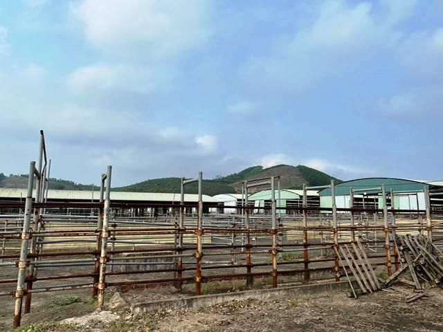 Khung cảnh hoang tàn bên trong đại dự án chăn nuôi bò của Công ty CP Chăn nuôi Bình Hà