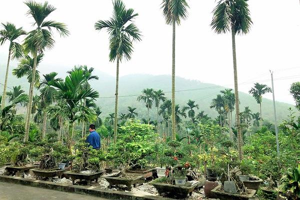 Mô hình vườn mẫu của gia đình ông Nguyễn Ngọc Quyết, thôn 3, xã Tân Tiến