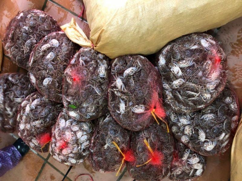 """Thực hiện triển khai """"Tháng hành động vì an toàn thực phẩm"""" năm 2021, Hải quan Quảng Ninh vừa phát hiện 100kg Cà ra nhập lậu từ Trung Quốc về Việt Nam"""