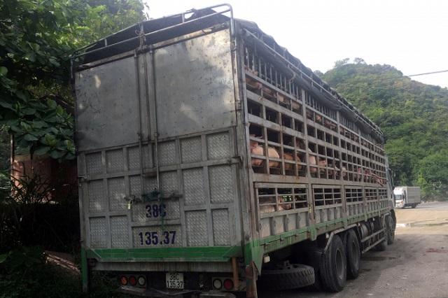 Lực lượng chức năng đã tiêu hủy toàn bộ số lợn trên theo đúng quy định về phòng chống dịch tả lợn châu Phi.