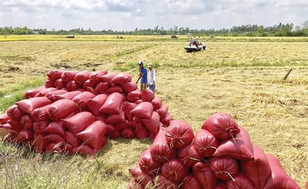 Philippines giảm thuế nhập khẩu ưu đãi đối với gạo