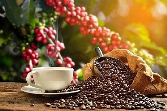Giá cà phê trong nước tăng 300 đồng/kg tại hầu hết các địa phương