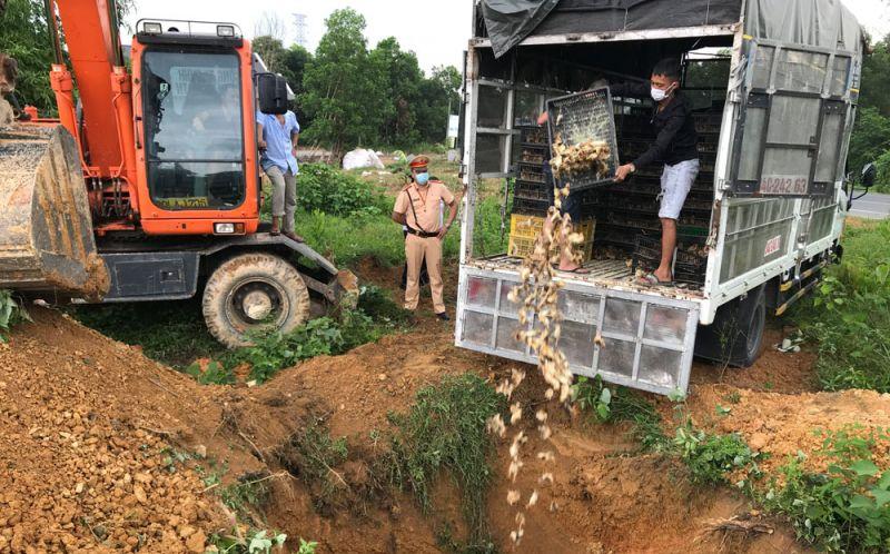 Lực lượng chức năng tỉnh Thái Nguyên giám sát việc tiêu hủy hơn 15 nghìn con gà giống, ngỗng giống không có giấy kiểm dịch vận chuyển liên tỉnh, không có hóa đơn, chứng từ