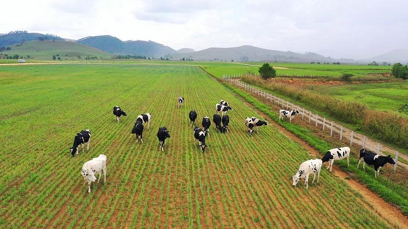 Dự án Tổ hợp trang trại Lao-Jagro có quỹ đất rộng, quy mô khi hoàn thành có thể lên đến 100.000 con