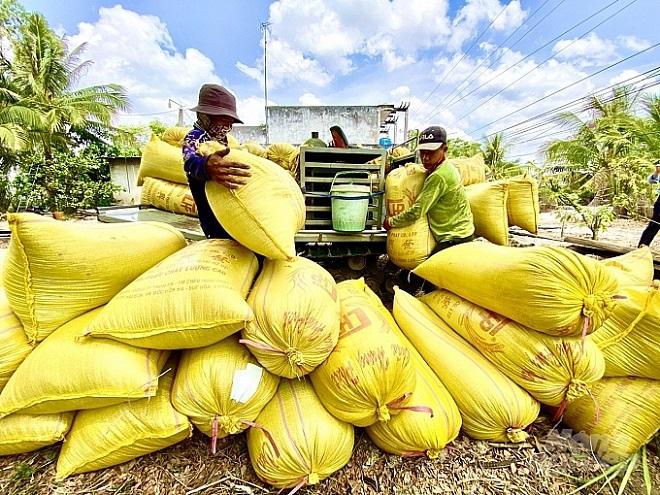 Hôm nay 20/6, giá lúa gạo tại thị trường trong nước và thế giới tương đối ổn định