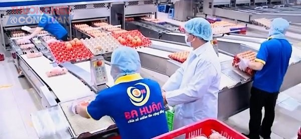 Ba Huân đi từ chăn nuôi cho đến tiêu thụ đúng theo qui trình của Vietgap, tạo ra những chuỗi sản phẩm sạch và đạt chất lượng tốt đến tay tiêu dùng.