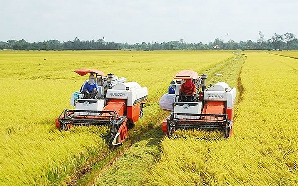 Lúa tăng nhẹ, gạo đi ngang