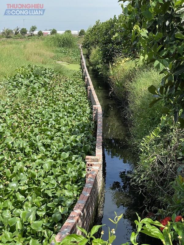 Nước thải chuồng nuôi xả trực tiếp ra hệ thống máng xây nối với ao của trang trại và từ ao chẩy ra kênh
